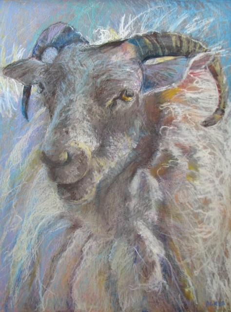 Horns by Aleda O'Connor