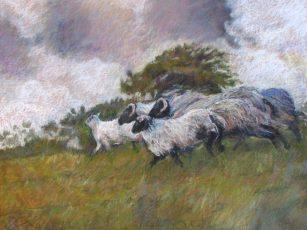 """Sheep Running 36"""" x 48"""""""