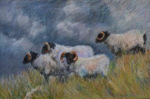 "Bluff Sheep 24"" x 36"" SOLD"