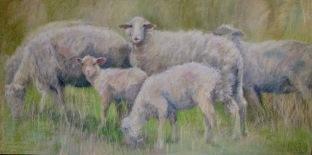 """Six Sheep Grazing 24 """" x 48"""" SOLD"""