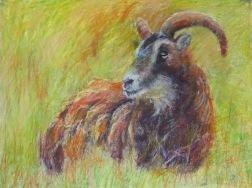"Amber Sheep 18"" x 24"""
